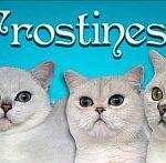 Frostiness*CZ