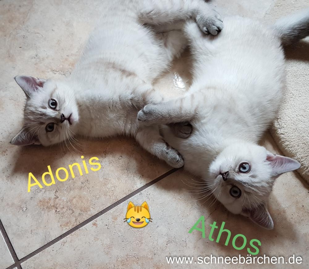 kitten (10)