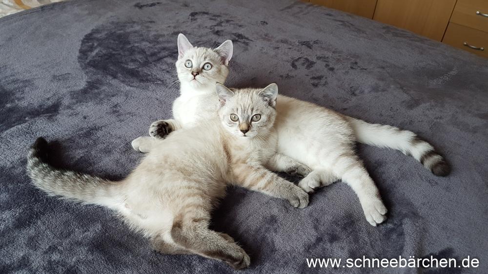 kitten (11)