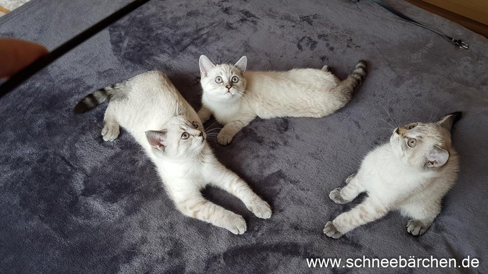 kitten (13)