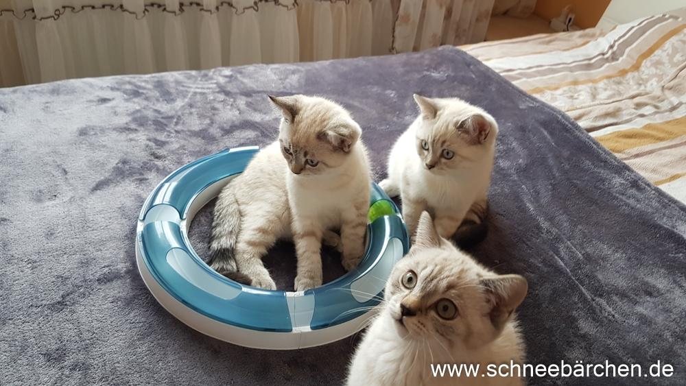 kitten (14)