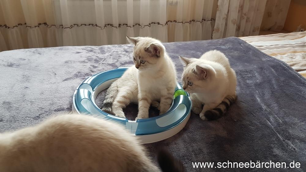 kitten (15)
