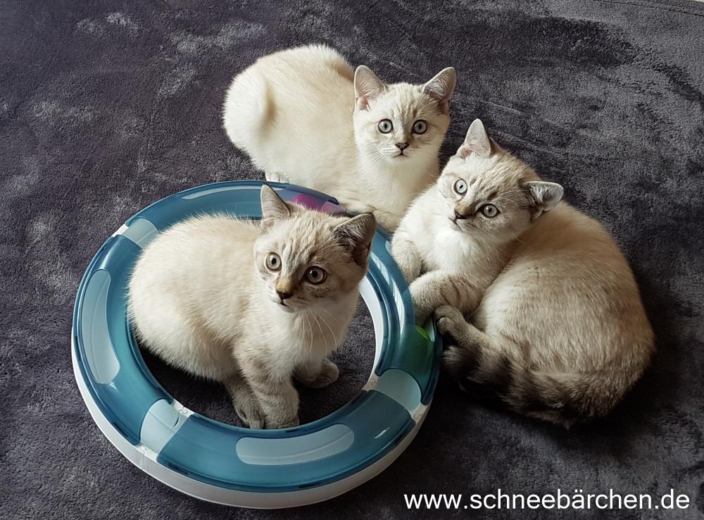 kitten (16)