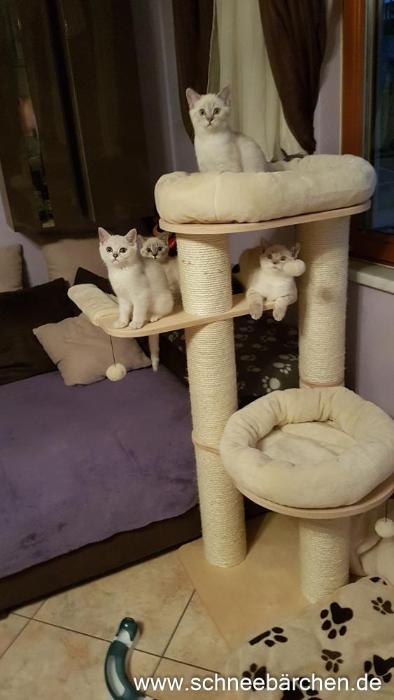 kitten (18)