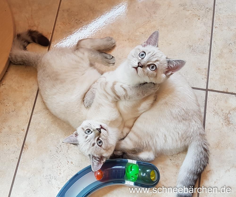 kitten (19)