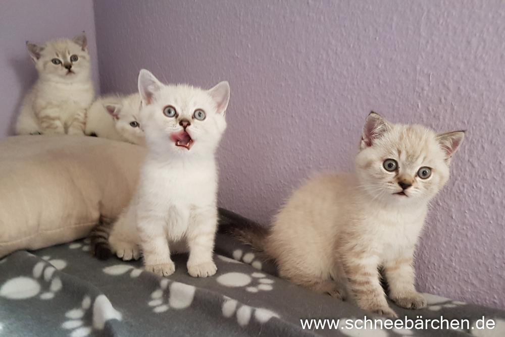 kitten (6)