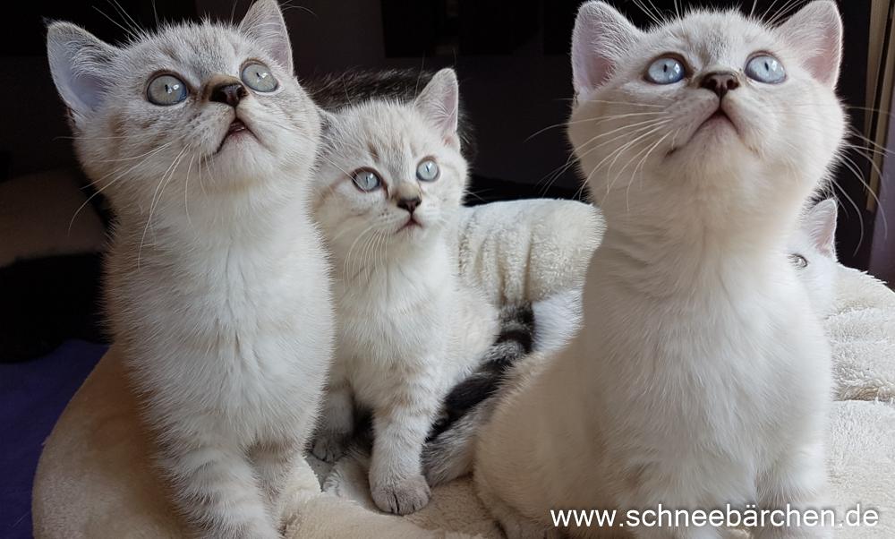 kitten (8)