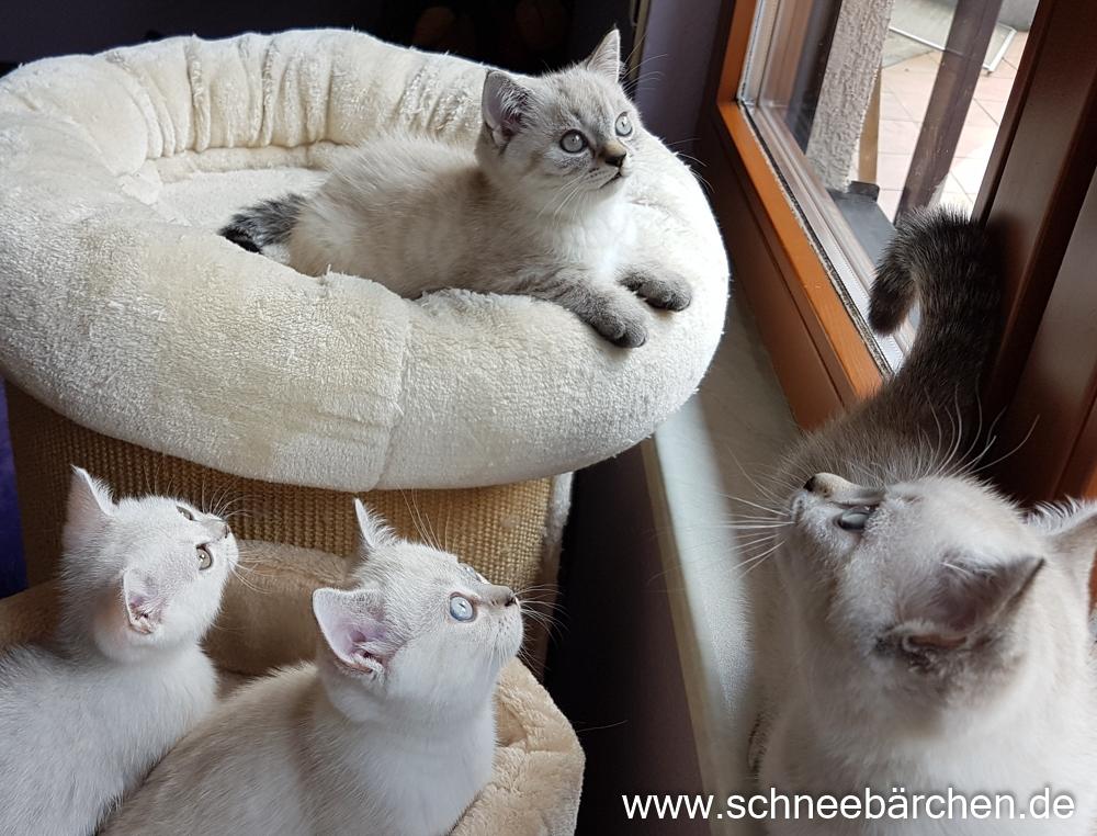 kitten (9)